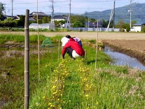 P1120997aze_kusakari.JPG