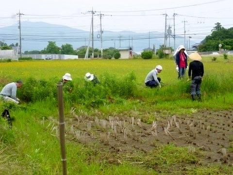 P1130905tanbo_kusakari.JPG